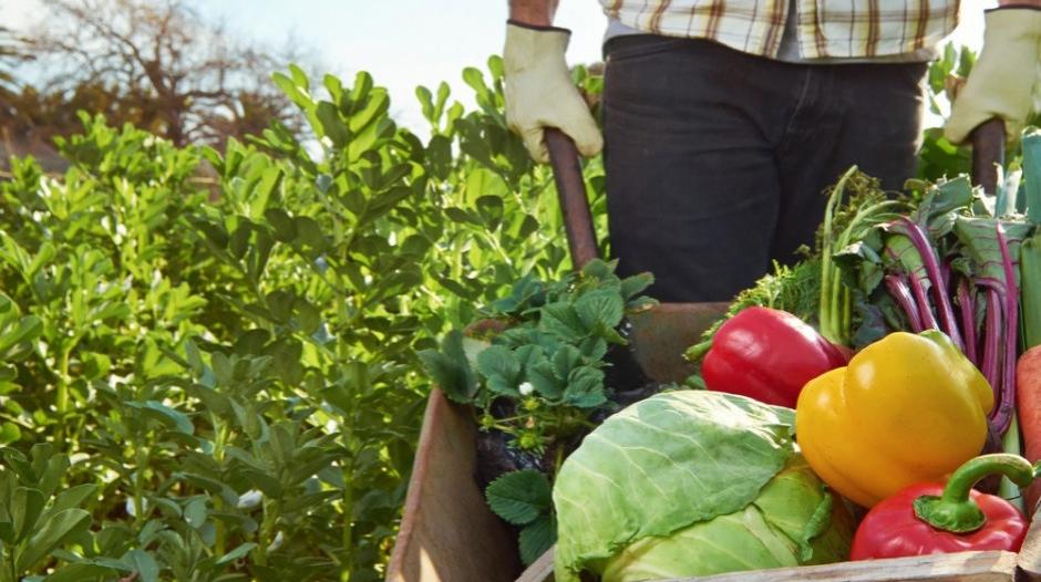 Miniaturka artykułu Wytyczne MRiRW i GIS dla producentów rolnych przy zatrudnianiu cudzoziemców